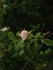 Mohnblütenzeit